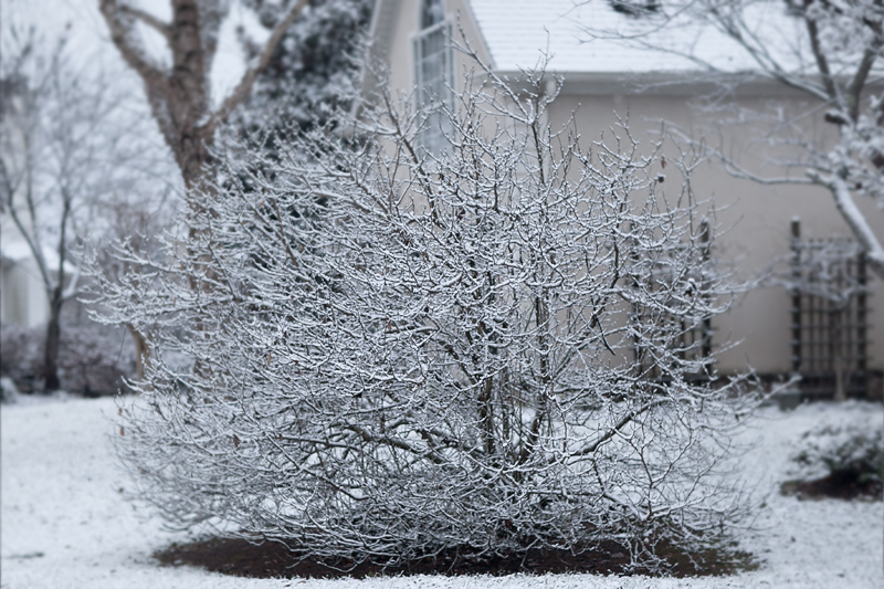 knoxville-tennessee-first-snow-2013-06
