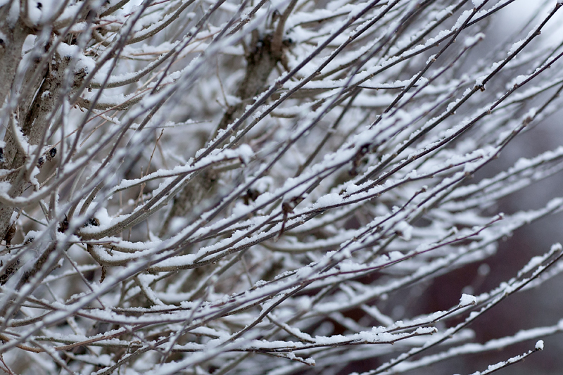 knoxville-tennessee-first-snow-2013-07