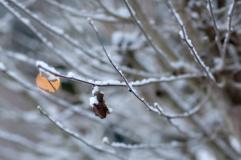 knoxville-tennessee-first-snow-2013-08