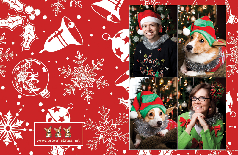 pembroke-welsh-corgi-christmas-card-photos-20