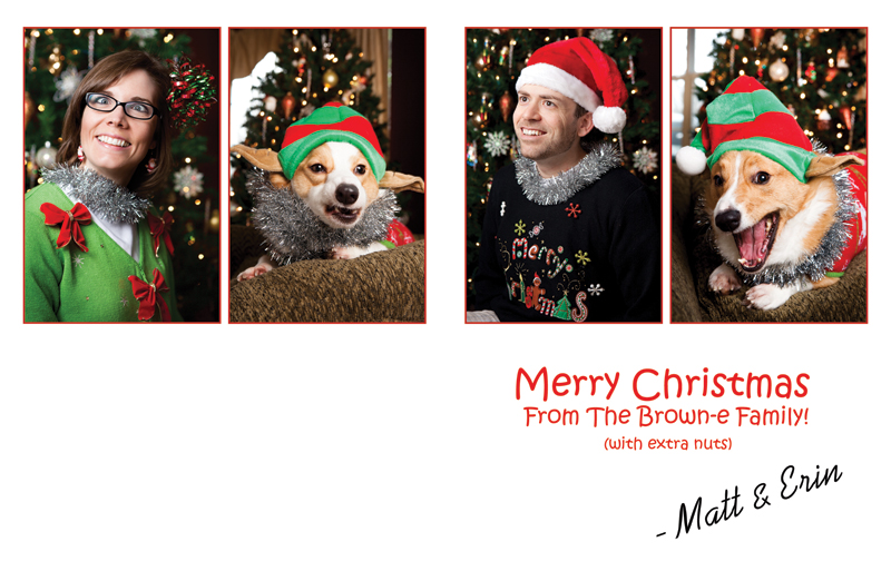 pembroke-welsh-corgi-christmas-card-photos-21