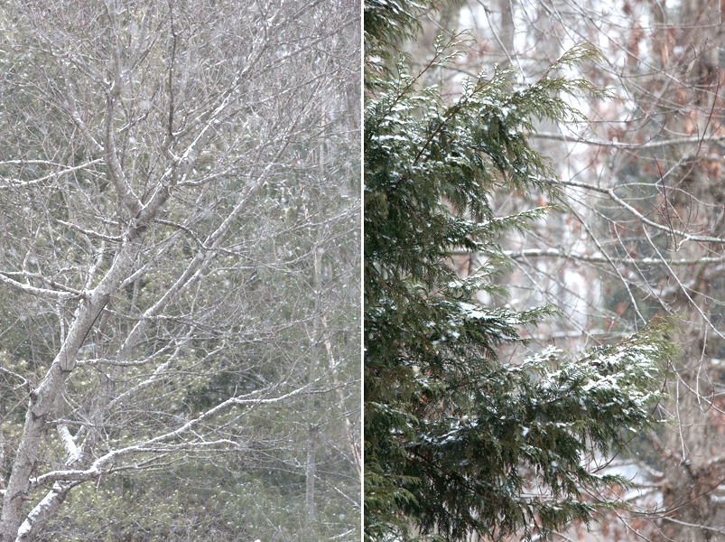snow-in-knoxville-tennessee-04