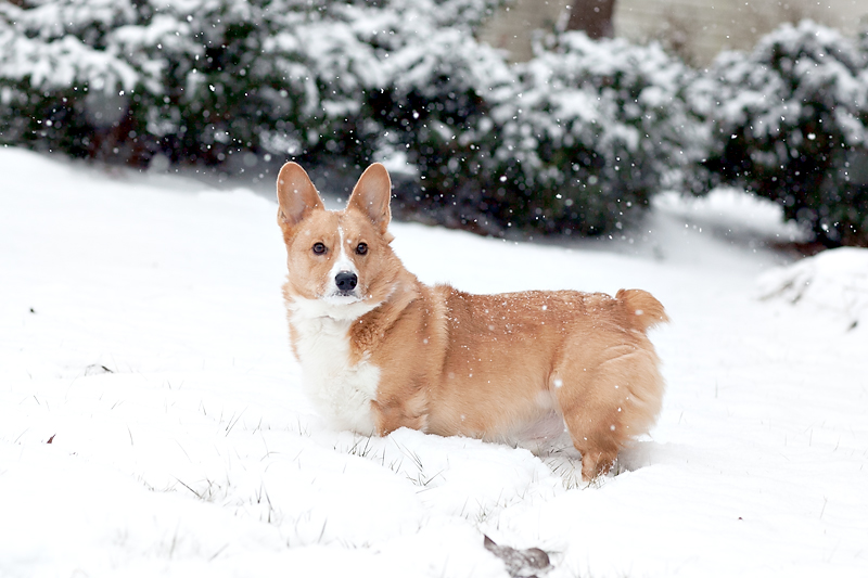 snow-in-knoxville-tennessee-11