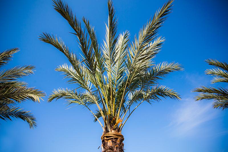 seaside-florida-what-to-do-10