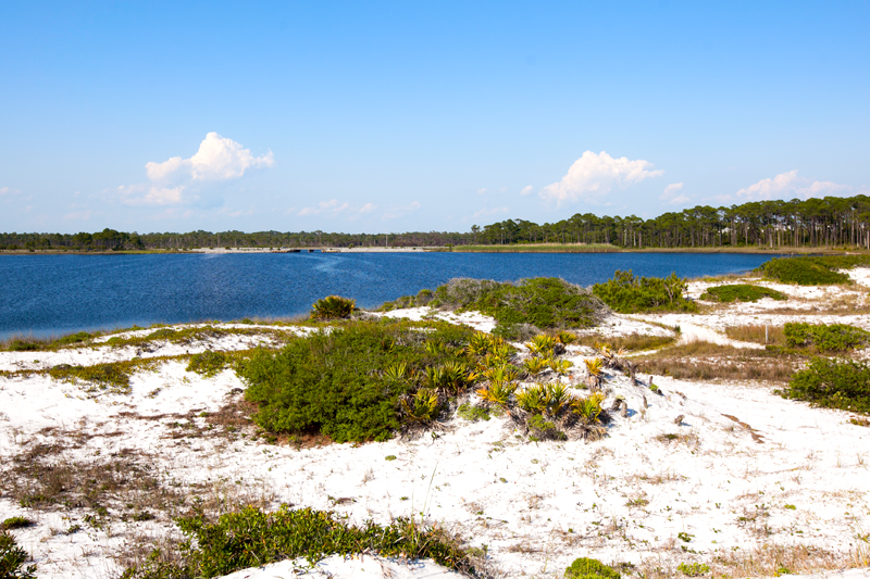 dog-friendly-hiking-in-florida-grayton-beach-02