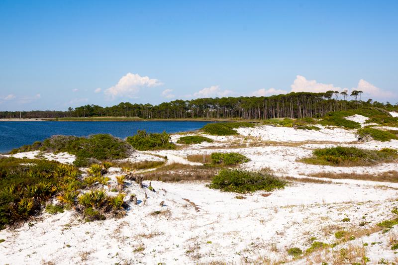 dog-friendly-hiking-in-florida-grayton-beach-04