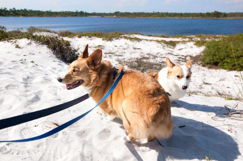 dog-friendly-hiking-in-florida-grayton-beach-05
