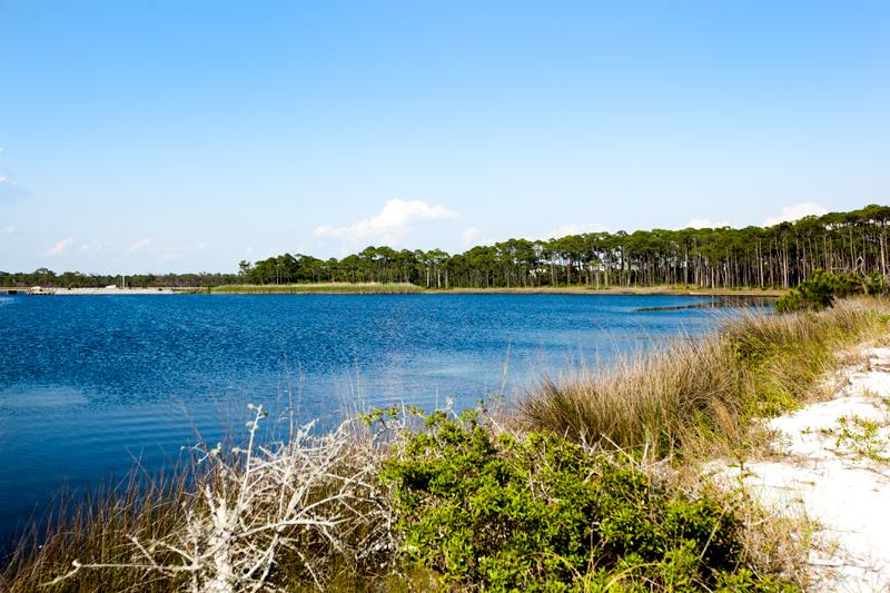 dog-friendly-hiking-in-florida-grayton-beach-07