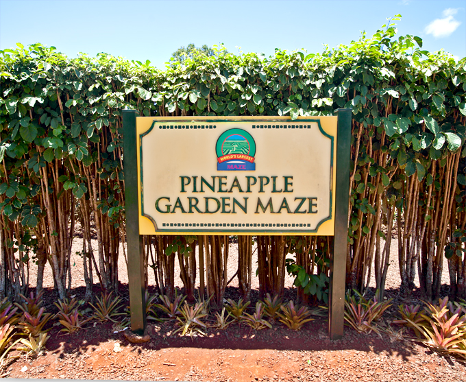 pineapple garden maze at dole