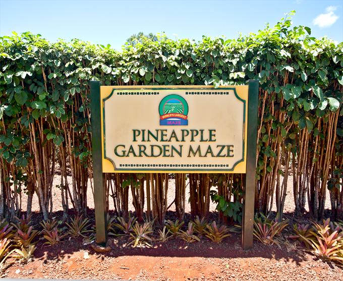 pineapple garden maze at dole