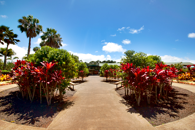 dole plantation gardens