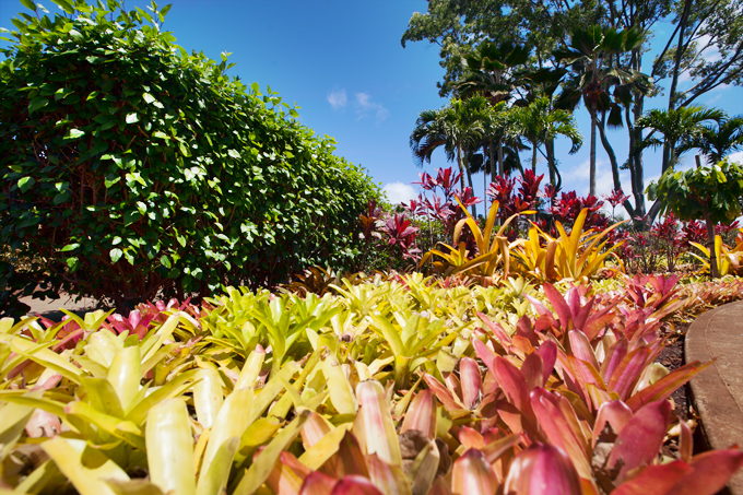 plants at dole plantation