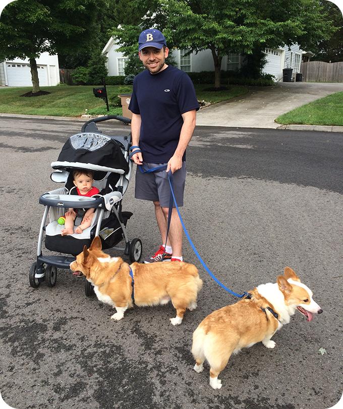 going-on-a-walk-with-corgis