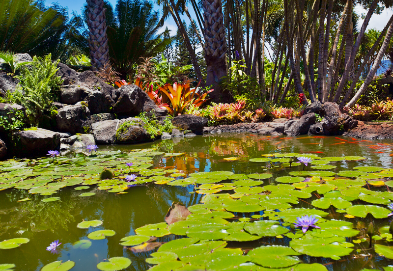 lily pads at dole plantation