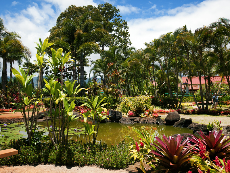plants and pond at dole plantation