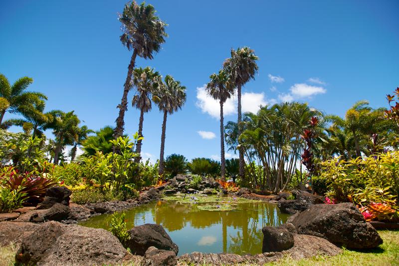 hawaii koi pond