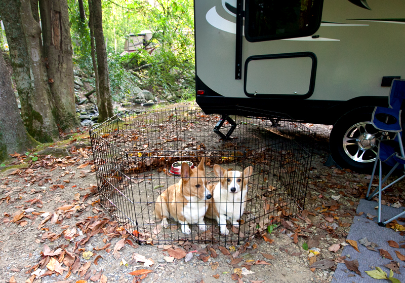 corgis-in-front-of-camper