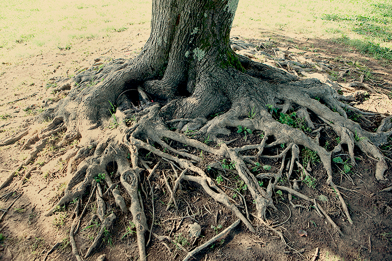 exposed-root-system