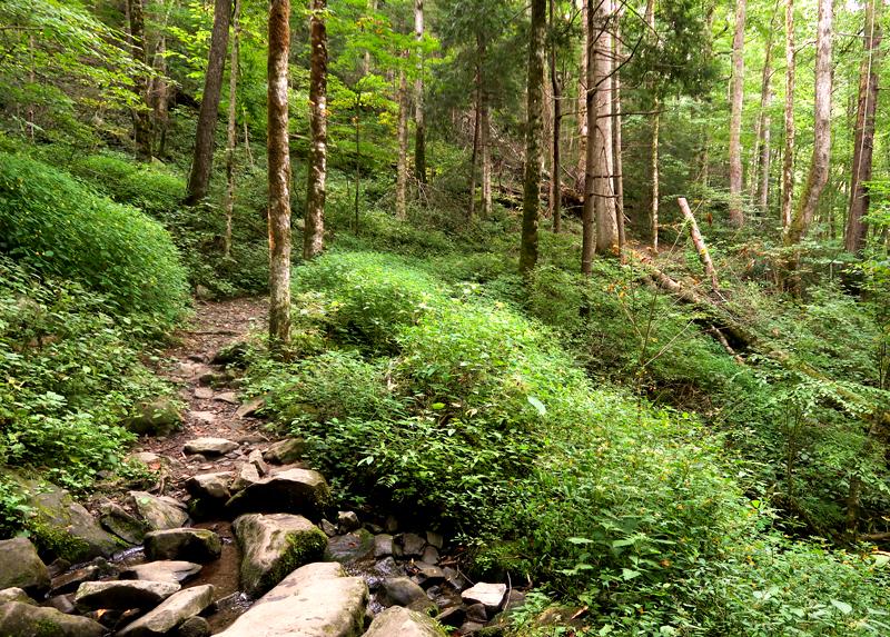 Porter's Creek falls hiking trail