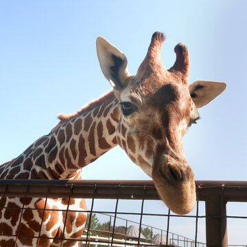Brights Zoo review in Limestone, TN, just outside of Jonesborough