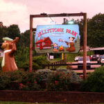 yogi-bear-jellystone-park-campground-mammoth-cave-ky-review-01