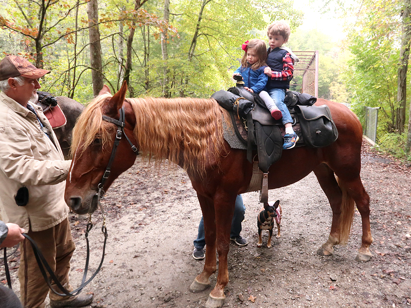 Things to do in Big South Fork - hiking, horseback riding, camping, and more