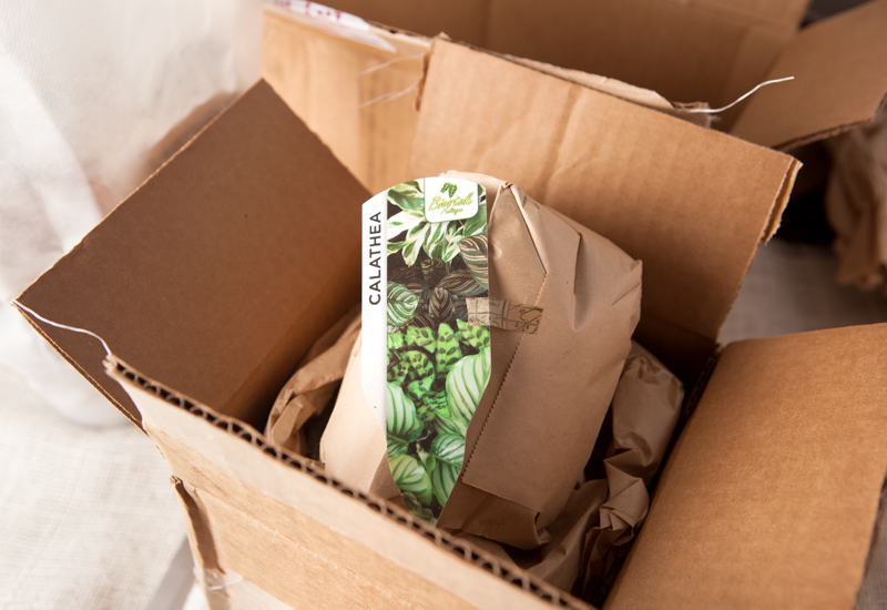 The Plant Club Subscription box review